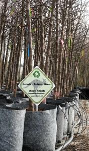 Junge Bäume in grauen 130L Root Pouches mit Tropfbewässerung